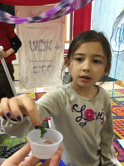 A second grader dips her כרפס (karpas--parsley) into salt water.