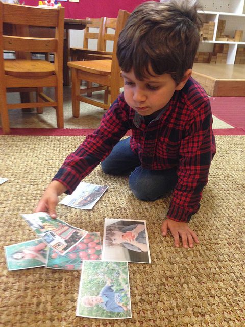 A three-year-old sorts different farming pictures.